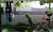 发个纯莫斯(懒人造景)草缸水草缸自然生长