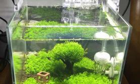 新手的20小方缸水草缸中间那是棵树水草缸不是西兰花~