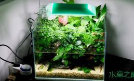 水草造景40水陆小缸终于送到客户办公室了