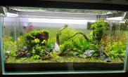 开缸一个月了水草缸看看长势如何鱼缸水族箱