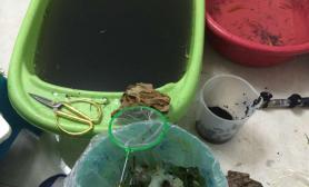 水草造景我的小缸2
