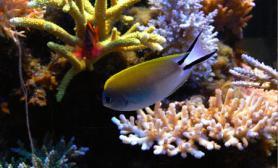 欣赏海水缸tdong75*75*50仙骨混养珊瑚海水鱼