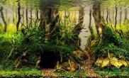 有点像小时候的自己幻想的树洞水草缸有啥不开心的都可以倒进去