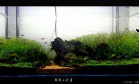 新人第一个缸水草缸以此纪念一个傻子(此缸已翻水草缸改天上新图)