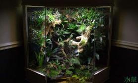 国外雨林缸欣赏