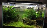 这几天收拾一下水草缸加了虾水草缸减了石水草缸换了水水草缸刮了藻……