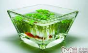 鱼缸水变绿了怎么办