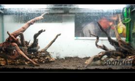 水草缸造景沉木水草泥化妆砂青龙石120CM尺寸设计06