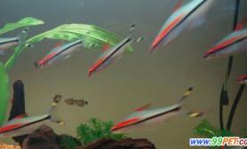 养热带鱼必须注意的五点(图)