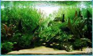 水草缸造景沉木水草泥化妆砂青龙石90CM尺寸设计44