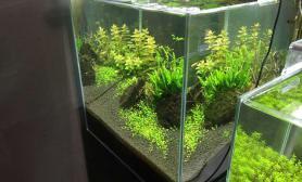 水草造景鱼乐水景的一些缸