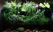 国外最新的水陆缸样式沉木杜鹃根青龙石水草泥如果你还在玩凤梨水草缸你就过时了沉木杜鹃根青龙石水草泥