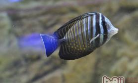水中加盐对观赏鱼造成的影响