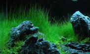 水草造景 鱼缸造景风格分类介绍