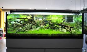 沉木青龙石水草造景150CM及以上尺寸设计31