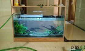 简简单单的屏风式阴性水草木石砂鱼缸