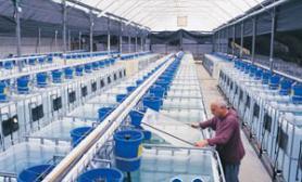 观赏鱼的天然鱼食介绍