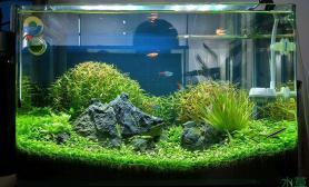 水族箱造景准备了3个月的开缸记录水草缸请大家鉴赏鱼缸水族箱