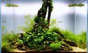 水草缸造景沉木水草泥化妆砂青龙石45CM及以下尺寸设计27