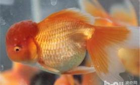 六招防止观赏鱼冬季冻伤