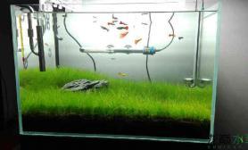 喜欢一匹野马水草缸因为家里有片草原