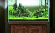 家庭装饰水草造景60CM青龙石造景图案例