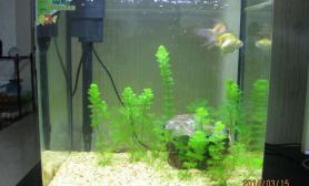 水草造景我的鱼缸