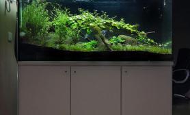 水草造景缸与底柜欣赏