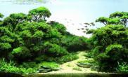 各种树水草缸看了有灵感