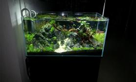 开缸一个月了水草缸各位大神请指导一下鱼缸水族箱