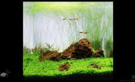 水草造景30方缸—碧—成景照——(补充配置和配草)