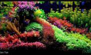 水族箱造景最爱彩虹似的水草缸