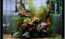 水族箱造景一木成景的水草造景