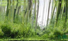 水草造景水草造景与栽培