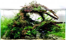 水草缸造景沉木水草泥化妆砂青龙石60CM尺寸设计62