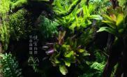 1米缸北京悦赏自然生态造景馆水景案例
