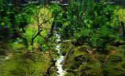 日本Charm水草造景比赛-14