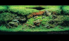 水草造景水草缸怎样换水?
