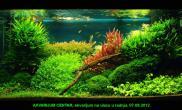 水草缸造景沉木水草泥化妆砂青龙石120CM尺寸设计56