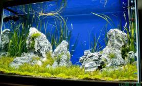 水草造景五个月的水草缸