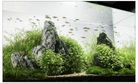 水草缸造景沉木水草泥化妆砂青龙石90CM尺寸设计100