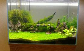 水草造景新手造的水草景欢迎指导