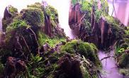 敞口水陆缸悬崖藤蔓造景