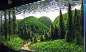 鱼缸造景【赢阳光几何全光谱LED】梦与现实的距离