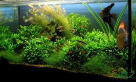 现实与幻界的临界点——水草造景