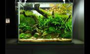 狂野的小缸珊瑚MOSS小型水草作品