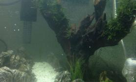 鱼缸造景翻了个缸水草缸造了个景水草缸大神们来给提提意见水草缸标题一定要长长长长长长……&^%^