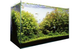 水草缸造景沉木水草泥化妆砂青龙石60CM尺寸设计16