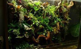 雨林造景缸分享