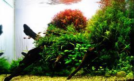 水草缸造景沉木水草泥化妆砂青龙石60CM尺寸设计23